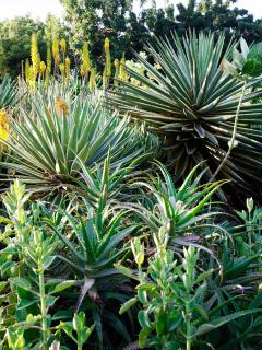 The gardens feature local plants that like the dry, salty atmosphere
