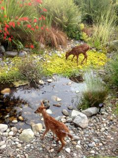 Twin fawns enjoying the pond (viewed from solarium)