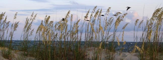 S. end of Tybee late afternoon flight of pelicans