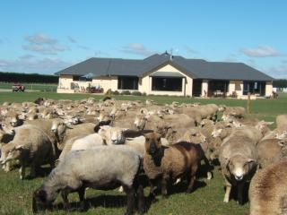 Pete's Farmstay Bed & Breakfast & Cottage, Christchurch