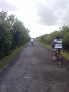 Take a day trip and bike the Everglades!