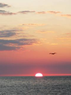 Sunsets are special on Sanibel.  You'll want to plan your day to be on the beach at sunset.