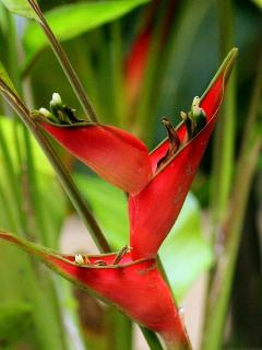 Tropical flowers abound in your gardens.