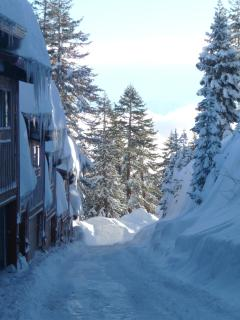 Lots of snow at our elevation!