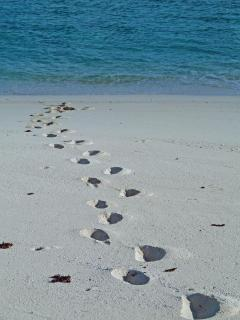 yours are the only footprints on North Beach