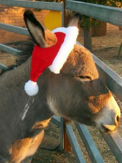 This is Quill...Our Rescue Donkey!!