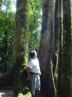 Primary Old Growth Rainforest still amazes me after 15 years