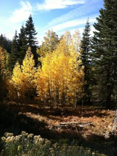 Aspens in Coldstream Canyon
