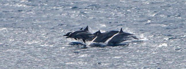 dolphins at the passage