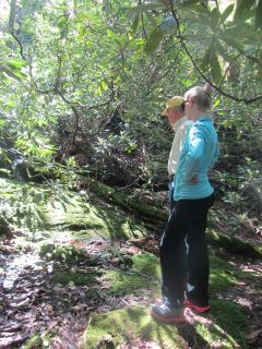 One block from the Guest House is the Kelsey Trail - a beautiful hike up to Big Bear Pen
