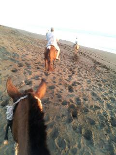 Condo Guest Horseback on Beach Jan 2012