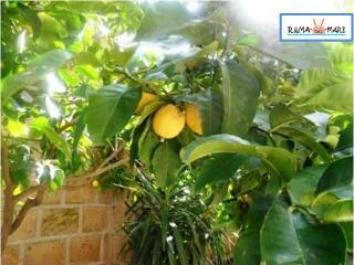 Apartment with free wi-fi and large garden - 100 m, Lido di Ostia