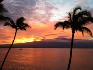 An artist's palette right from the lanai!