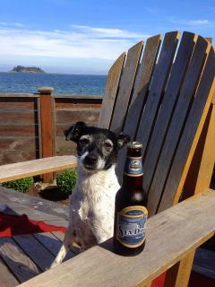 Cooper the salty sea dog enjoying her time on the ocean at Seaview Beach House.