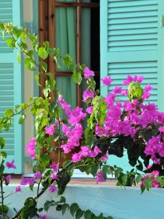 Beautiful colors and flowers