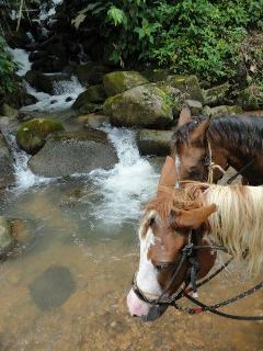 Take a horse tour with Marvin our Tico neighbour