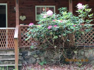Pura Vida Cottage ~ the Essence of Life, Bakersville