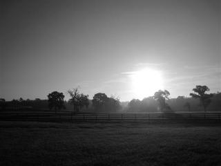 Apartment Close to Horses, Dunnellon