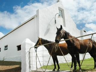 Converted horse stable - self catering cottage - B, Bredasdorp