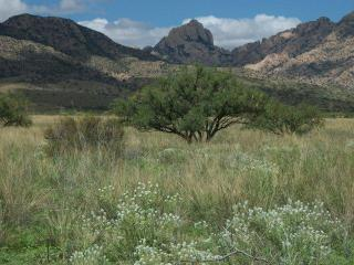 Cochise Stronghold National Forest Getaway, Pearce