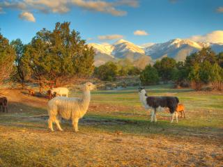 Mountain Goat Lodge Goat Farm, Salida