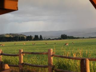 Relaxation, Wildlife, and the Madison River, Ennis