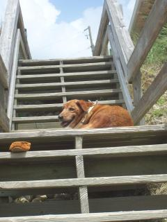We are pet friendly!  This is our dog on the beach steps and one shoe left behind.
