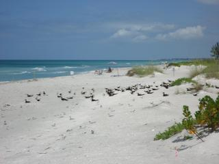 Las Hermanas/Starfish Beach front Longboat Key #3