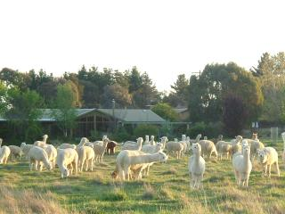 Self Contained Suites on a Alpaca farm - New South Wales vacation rentals