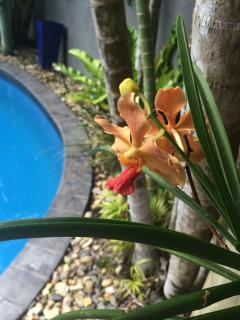 Orchids poolside