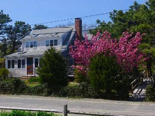 405 Wilson Ave. - Easy walk to beach, with extras, Wellfleet