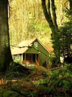 cabin from forest