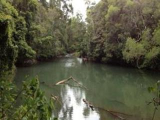 Figtree Getaway self contained cabin in Rainforest, Malanda