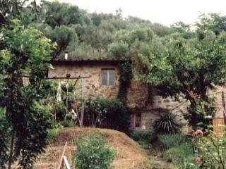Traditional Tuscan olive farm, sleeps 2 to 12 - Pescia vacation rentals