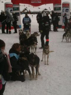 Try Dog Sleding at Les Molliet, or watch professionals on the Les Carroz to Flaine leg of a race.