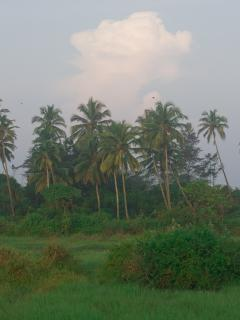 View of palm trees from villa c20