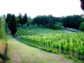 Visit one of the local wineries and try a wine tasting!