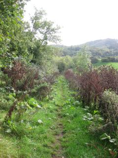 Forestry commission track from the front door giving access to a vast network of footpaths!