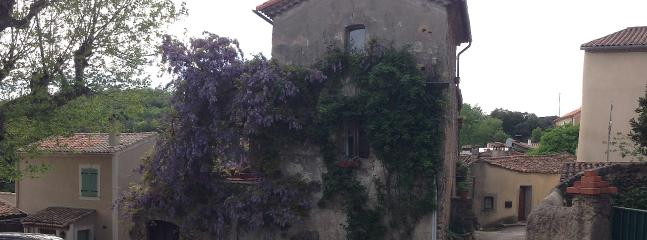 Wisteria! Roses about to bloom on all sides of the house! Taken may 8, 2013