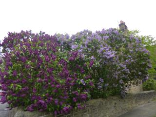 Lilac Gables Traditional Stone Townhouse, Skipton
