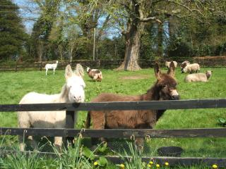 Mill Farm Cottages Foulksmills County Wexford Irel
