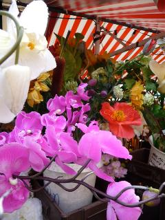 orchids and wonderful plants at the outdoor market