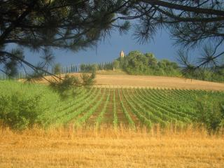 Tuscany country betweenOrcia Valley and Montalcino, Buonconvento