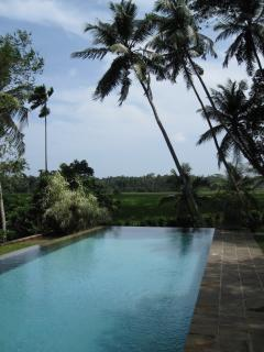View from the pool towards the rice paddy