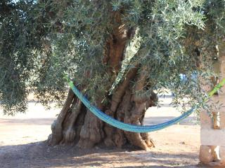 LA PICCOLA LAMIA SURROUNDED BY OLIVE TREES, Torre Canne