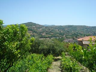 Olive groves and sea, Agropoli