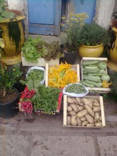 Our vegetables of our organic garden.