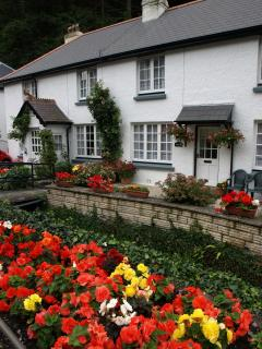 Polperro in bloom