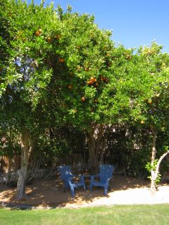 Listen to the birdsong while enjoying shade under our mini citrus grove