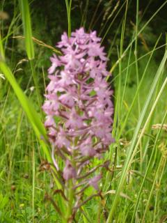 Wild orchids just metres from the house